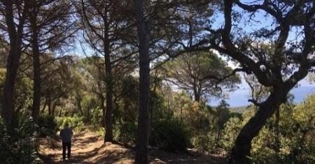 Banys al bosc a Tossa de Mar
