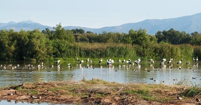 Spring visits in the natural spaces of the Empordà