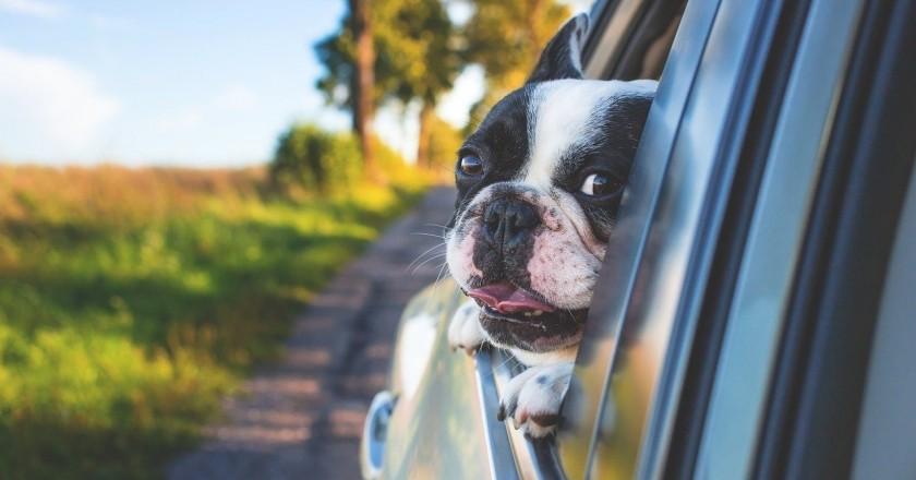 Lieux à visiter avec votre animal de compagnie