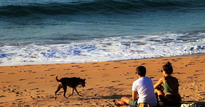 Les millors platges de Catalunya per anar amb gossos