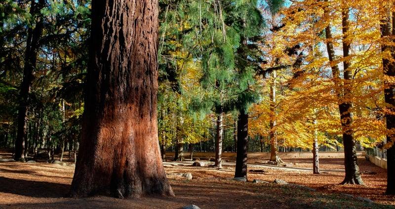 Monumental trees in Catalonia