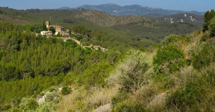 Camino del Castillo Viejo de Olivella