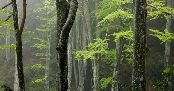 La forêt de Ribera à Santa Maria d'Oló