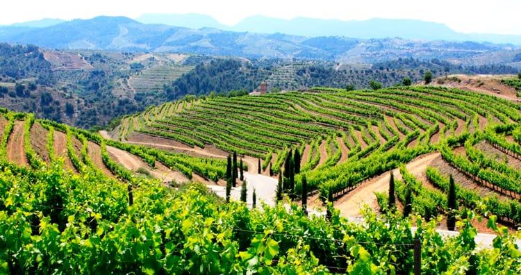 Las tierras del vino del Priorato