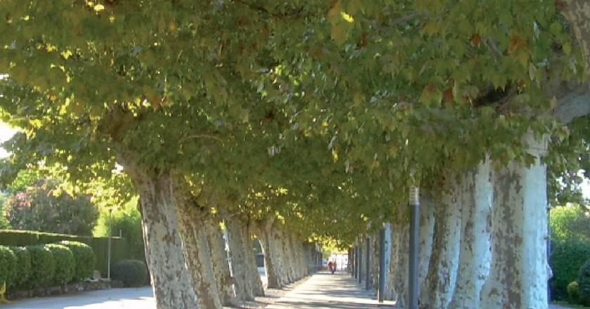 Passeig dels arbres de Santa Maria de Palautordera