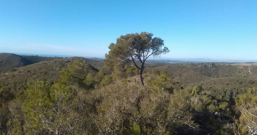 Ruta del pi solitari a Roda de Berà