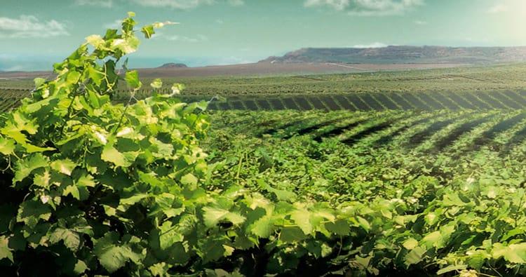 Route des vins: Costers del Segre