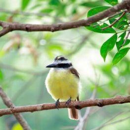 3 de març, dia Mundial de la Natura