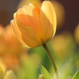 Agenda de primavera a Ascó