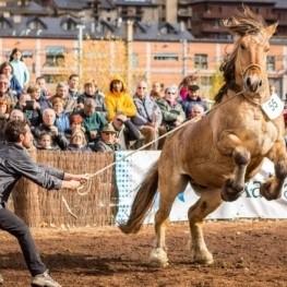 Concours national du cheval des Pyrénées catalanes à Puigcerdà