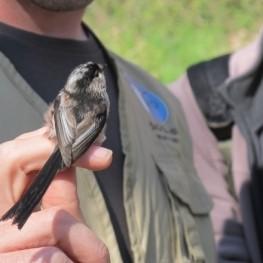 Els Ocells del Cava al celler Segura Viudas