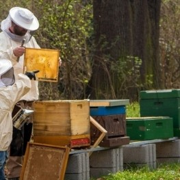 Expérience apitouristique dans la vallée des Ribes de Freser