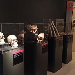Bones Exhibition at the Museo de la Noguera