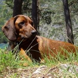 Girocaça, Fira de la Caça i la Natura a Santa Cristina d'Aro