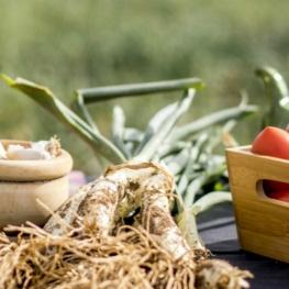 Journées gastronomiques Calçot à Mont-roig del Camp