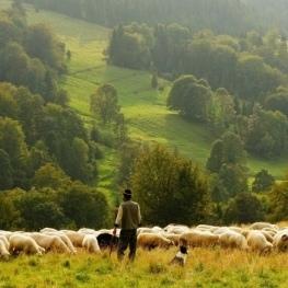 Projecció documental 'Dones pastores al Penedès' a Igualada