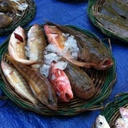 Subhasta cantada de peix a El Masnou