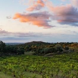 Tardes de vins i música a la fresca a Vinyes d'Olivardots de…