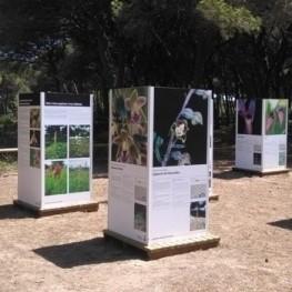 Visita guiada i exposició d'Orquídies a la Pineda del Remolar…