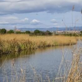 Visites a l'Espai natural de la Séquia Major a Vila-seca