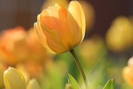 Agenda de primavera en Ascó