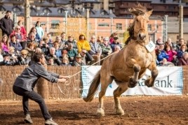 Concurs Nacional del cavall pirinenc català a Puigcerdà