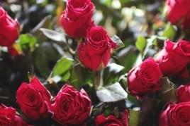Gimcana de la Rosa de Calaix de Sastre a Sant Feliu de Llobregat