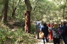 Forest week in Sant Celoni