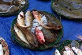 Vente aux enchères de poissons chantés à El Masnou