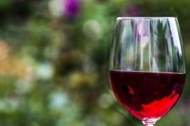 Visita guiada a la vinya Can Rovira de Fogars