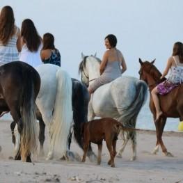 Hípica Mas Paguina i Turisme Rural
