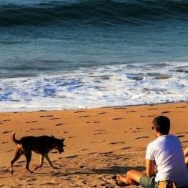 Les meilleures plages de Catalogne pour aller avec des chiens