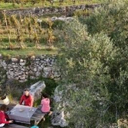 Caminada i tast de vins