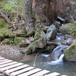 Way of the Ribera in Alp