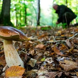 Looking for mushrooms in Berguedà and Solsonès