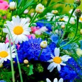 Fires de flors i jardins