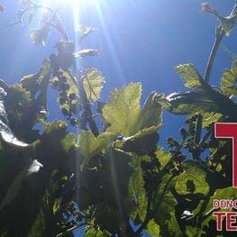 Paisatges del vi: DO Terra Alta