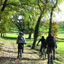 Ruta Bosc de Casanoves - El Querol a Collsuspina