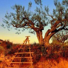 Ruta dels Templers per la Segarra